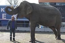 Slonice Kitty a Dolly předvádějí v cirkusu komickou show. Atrakcí jsou přes den  i pro kolemjdoucí.
