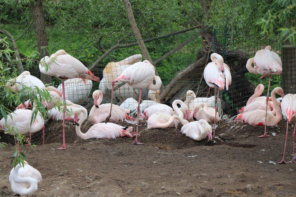 Jihočeská zoologická zahrada Hluboká