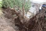 Extrémně silný vítr v Českých Budějovicích na Pražském předměstí vyvrací stromy.