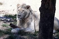 Zoo Dvorec