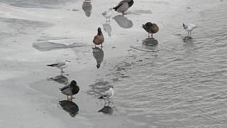 Ebenové obrázky ptáka