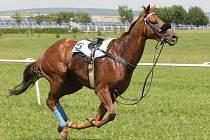 Kůň. Ilustrační foto.