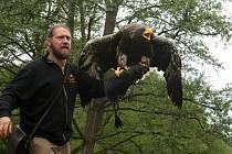 Letové ukázky dravců uvidíte i u Lišova. Ilustrační foto.
