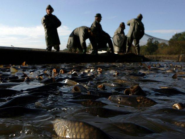 Obrázek tradičních rybářských výlovů bude už brzy k vidění na vodních plochách nejen v českobudějovickém regionu.