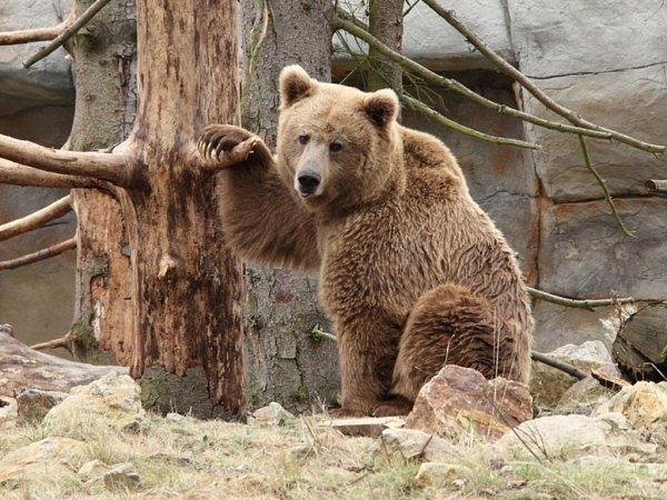 Vzácní medvědi zhlubocké zoo.