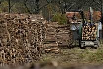 Majitelé lesů přicházejí o stromy, které jsou kořistí zlodějů. Ilustrační foto.