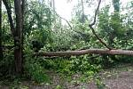 Na psí kotce a na garáž spadly Ivanovi Horáčkovi z Chlumu u Třeboně při sobotním dešti a větru čtyři stromy.