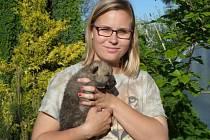 Štěňátko. Ošetřovatelka zvířat Nikola Hrubá představuje mládě vlka arktického.