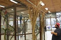 Exotické ptactvo je možné spatřit v sobotu a v neděli na českobudějovickém výstavišti.
