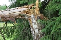 V Budějovicích u sportovní haly v noci 22. června spadla při bouřce bříza.