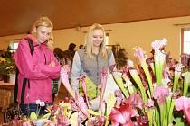 Zájem návštěvníků přitahovaly nejen orchideje, ale i kolekce masožravých rostlin.
