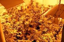 Marihuana. Za výrobu této drogy hrozí pět let.