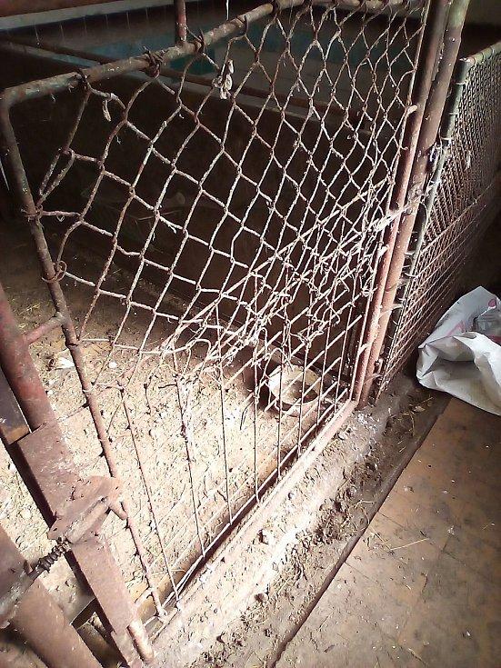 V množírně v Chvalešovicích na Českobudějovicku přežívalo 9 fen a tři psi. Zachráněným psům se dostalo náležité veterinární péče. Většina už se dočkala nového domova.