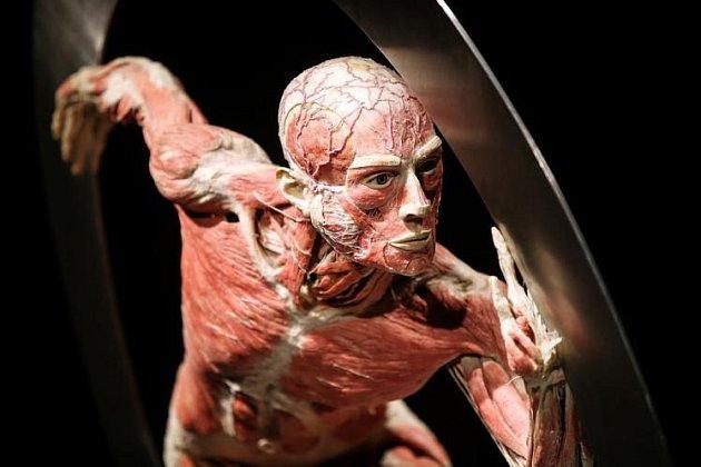 Svět těl v Linci už vidělo 15 000 lidí.