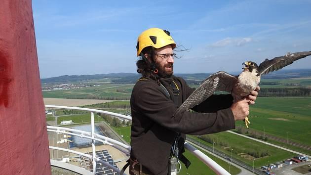 Ornitolog Václav Beran při kontrole sokolího hnízda na druhé nejvyšší stavbě Temelína.