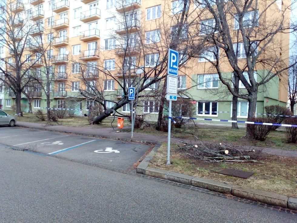 Vyvrácený strom v českobudějovické Pekárenské ulici. Vichr 10. 2. 2020.