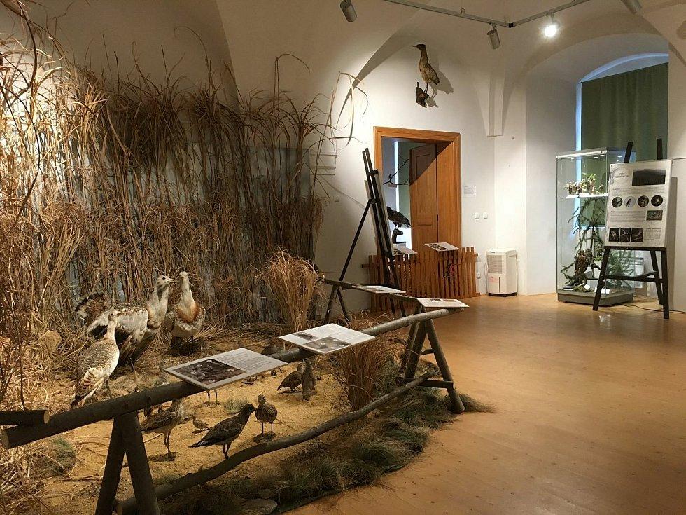 Hlavní výstava sezony Klenoty ornitologických sbírek.
