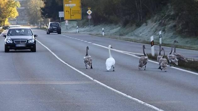 Rodinka na pochodu.