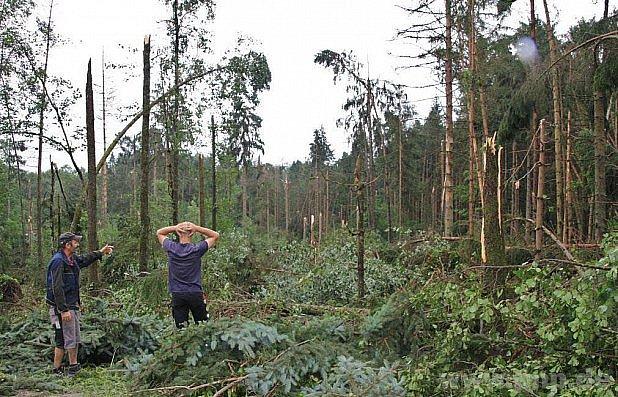 Poničený les vSalzwegu.
