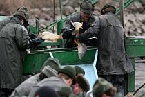 V těchto dnech jsou na rybnících velikonoční výlovy v plném proudu. Ryb bude o svátcích dostatek.