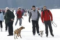 Milovníci zimního bruslení si také v těchto dnech užívají speciální několikakilometrovou dráhu na zamrzlém Lipně. I v těchto teplejších dnech by bruslaři na Lipně neměli mít strach, síla ledu je podle provozovatele dráhy dostatečná.