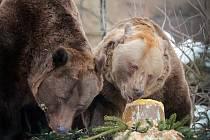 Medvědi v Zoo Ohrada slavili narozeniny.