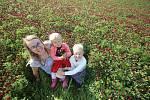 Pole červeného jetele u Temelína se stalo populárním fotopointem.