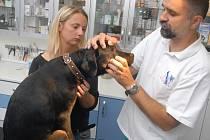 Prohlídka u veterináře. Ilustrační foto.