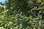 S odchytem exotického ptáka ve Lnářích pomáhali i dva hasiči lezci.