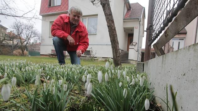 Rozkvetlé kytičky v Českých Budějovicích v ulici U Trojice.