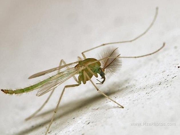 Rozmanitost a početnost čeledi vodního hmyzu a rozšíření po celém světě umožňují nahlížet na pakomáry jako na modelovou skupinu pro řešení  ekologických a biologických problémů.