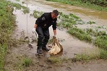 Strážníci vylovili z vody i maso, určené ke grilování.