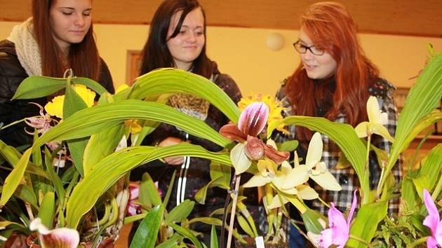 Výstava exotických květin v Homolích.