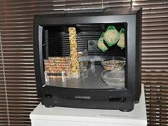 Ptačí budky a krmítka v podobě kočičích hlav, starých televizorů či Warholovy plechovky od polévky a mnoha dalších tvarů zaplnily Prácheňské muzeum v Písku. Výstava Píp šou potrvá do konce roku.