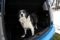 Nezletilý psí recidivista se dostal za mříže