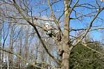 Opeřenci, připravení k předvedení, čekali na svou chvíli v látkových pytlících na stromě. Odtud je sundaval asistent.