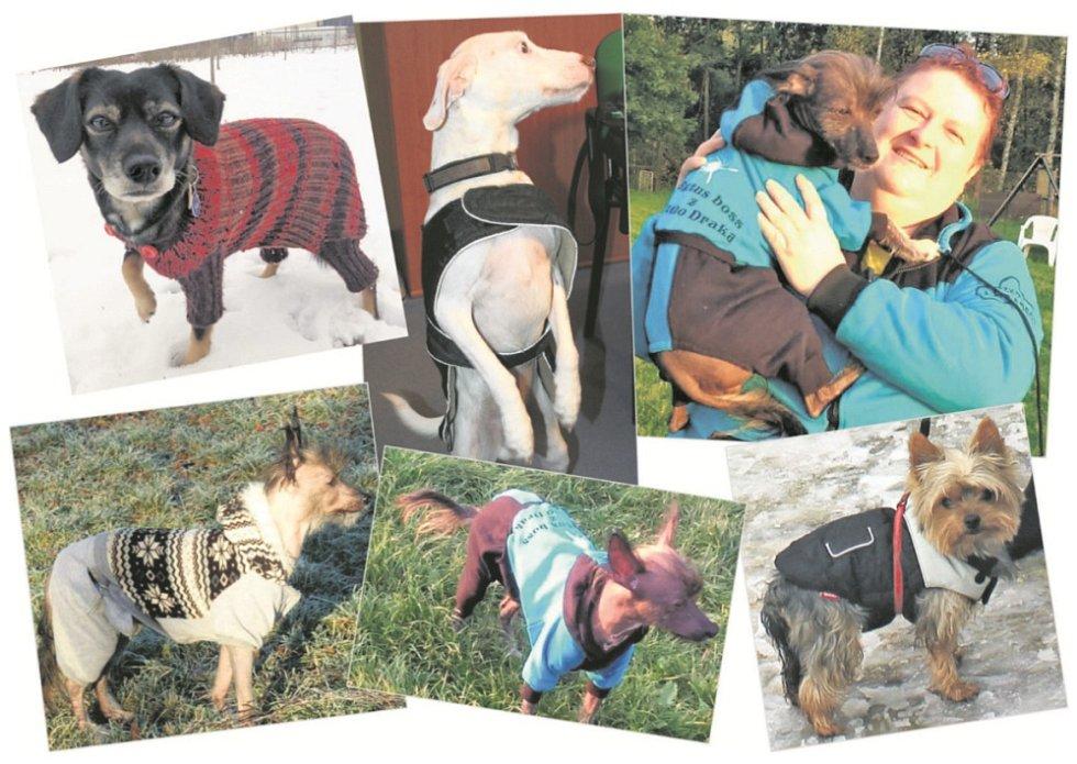 Nejde o módu, ale o psí zdraví. A když navíc sluší, je to bonus.