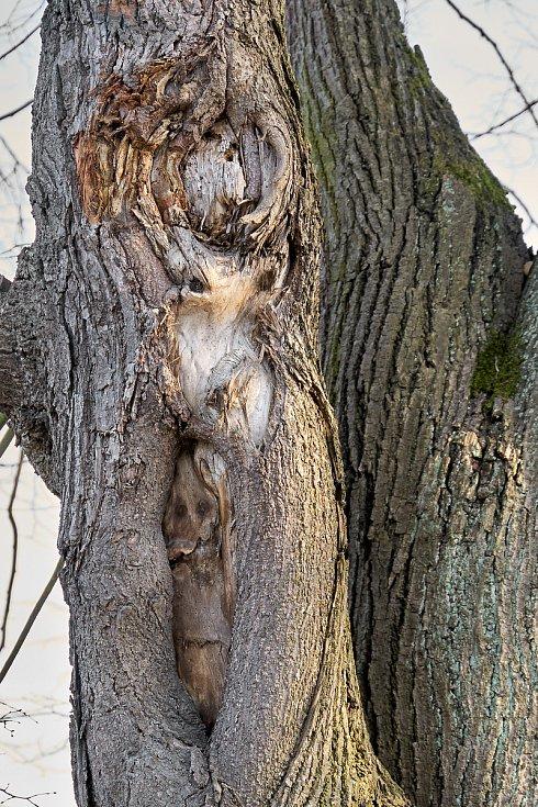 Duch stromový 10 - tři v jednom