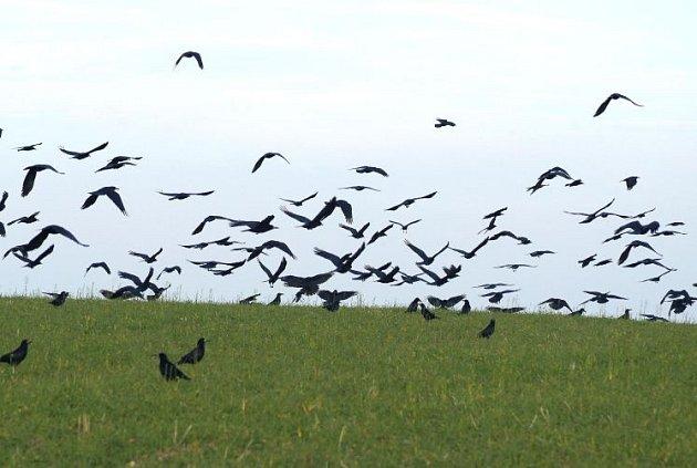 Sousedé se chystají střílet vrány.