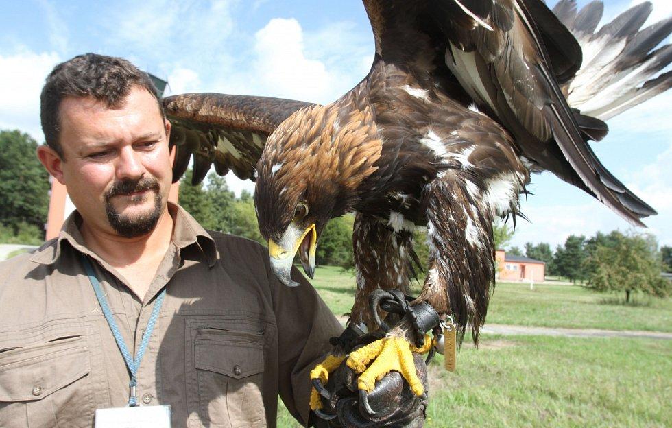 Sokolník Radek Staněk se svými opeřenými svěřenci chrání letiště před ptačími nálety.
