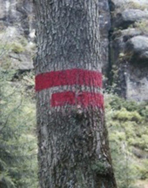 Značení klidové zóny NP Šumava na stromě.