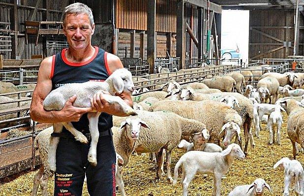 Mistrem ve střídání ovcí.
