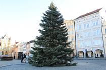 Vánoční strom, který i letos vyhrál anketu nejkrásnějšího vánočního stromečku, zdobil náměstí Přemysla Otakara II. Nyní už je pryč.