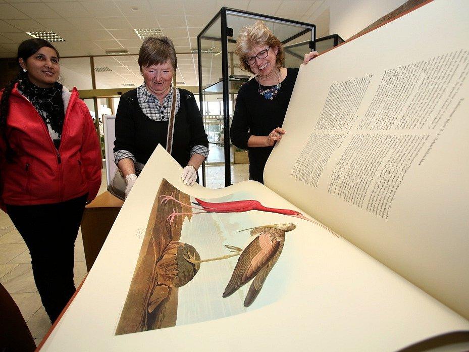 Poklady ze sbírek Jihočeské vědecké knihovny se jmenuje kniha, která shrnuje její největší vzácnosti. Patří k nim i soubor obřích akvarelů amerických ptáků. Unikáty ukázala knihovna 14. ledna ve svém českobudějovickém sídle
