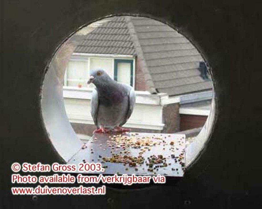Trubkový městský holubník v Amsterdamu.
