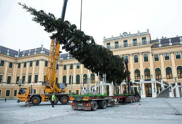 Vídeň už má vánoční strom.