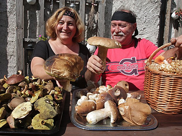 Stovky hub našli Vladimír Kumpoch a Iveta Zuklínová z Českých Budějovic v okolí rybníka Žár na Novohradsku.