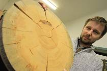 Novým přírůstkem se může pochlubit pobočka Národního zemědělského muzea na Hluboké. Její ředitel Martin Slaba ukazuje výřez ze smrku ztepilého, jehož věk se odhaduje na 559 let a který rostl u Plešného jezera. Zkázu pro něho znamenal kůrovec v roce 2003.