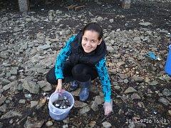 Obrovské kolonie škeblí se objevily na dně rybníka Mrhal v Jivně. Snaží se je zachránit dobrovoln