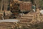 """Na přelomu roku 2006 a 2007 hrozil podle odborníků celému dřevařskému odvětví kolaps kvůli nedostatku dříví. Kdyby v polovině ledna """"nepomohl"""" orkán Kyrill, řadě regionálních odběratelů hrozilo zastavení výroby."""